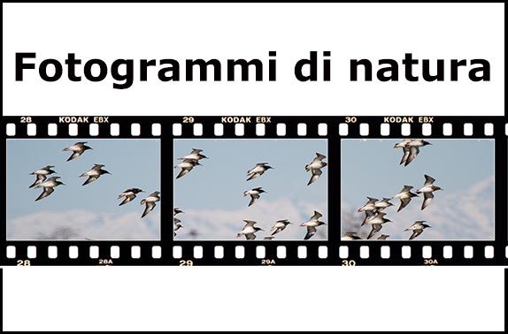 fotogrammi-di-natura-titolo