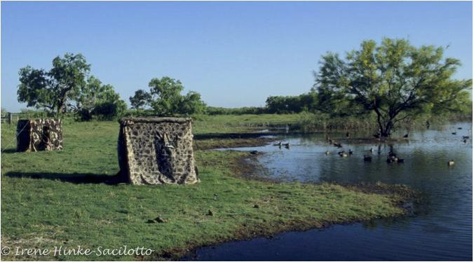 Fonte: www.ospreyphoto.com